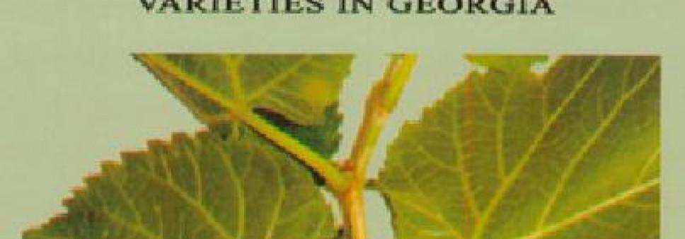 საქართველოს თუთის ჯიშების მორფოლოგიური და სამეურნეო დახასიათება